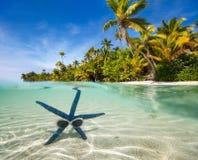 Голубые starfish на тропическом пляже Стоковые Фото
