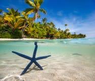 Голубые starfish на тропическом пляже Стоковые Изображения RF
