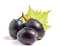 3 голубых виноградины при лист изолированные на белой предпосылке Стоковые Фото