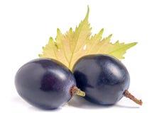 2 голубых виноградины при лист изолированные на белой предпосылке Стоковое Изображение RF