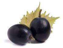 2 голубых виноградины при лист изолированные на белой предпосылке Стоковые Фото