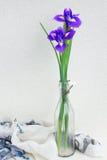 2 голубых цветка irise Стоковая Фотография