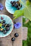 2 голубых чашки с черными смородинами на стенде Стоковая Фотография