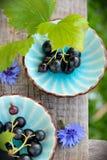 2 голубых чашки с черными смородинами на стенде Стоковое Изображение RF