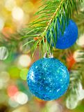 2 голубых шарика рождества на елевой ветви Стоковая Фотография