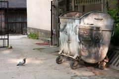 Голубь и мусорный бак Стоковые Фото