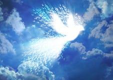 Голубь мира Стоковое фото RF