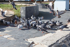 Голубь на парке Стоковые Фото