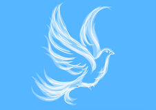 Голубь на сини Стоковые Фото