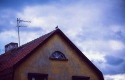 Голубь на старой крыше дома Стоковая Фотография