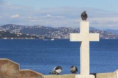 Голубь сидит на мраморном кресте стоковое изображение rf