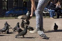 Голубь сидит на руке девушки, стада птиц Стоковая Фотография