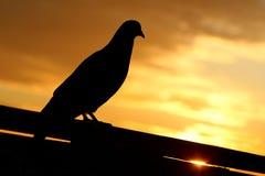 Мир доброго утра Стоковые Фото