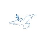 Голубь с оливковой веткой Стоковая Фотография