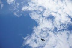 Голубь Стоковые Изображения RF