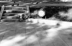 Голубь Стоковая Фотография RF