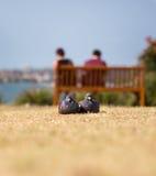 2 голубя в влюбленности Стоковые Изображения