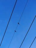 2 голубя зебры Стоковая Фотография