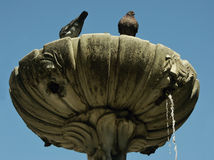 2 голубя на верхней части fontain Стоковые Изображения RF