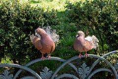 2 голубя на загородке Стоковая Фотография RF