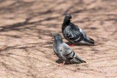 2 голубя на солнечный день Стоковое Изображение