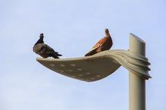 2 голубя на фонарном столбе улицы в пасмурном дне Стоковые Изображения RF