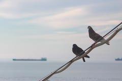 2 голубя на фоне Чёрного моря Стоковые Изображения