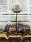 2 голубя на фонтане Стоковые Фотографии RF