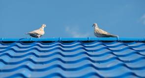 2 голубя на черепице Стоковые Фотографии RF