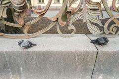 2 голубя Санкт-Петербурга Стоковая Фотография