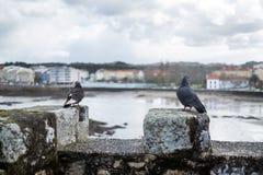 2 голубя садились на насест на зубчатых стенах средневекового замка на r Стоковая Фотография RF