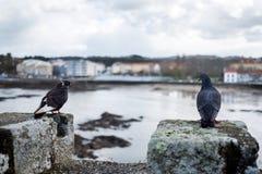 2 голубя садились на насест на зубчатых стенах средневекового замка на r Стоковое фото RF
