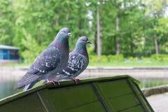 2 голубя сидя на краю переворачиванной шлюпки стоковое изображение