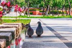2 голубя сидя togeather Стоковые Изображения RF