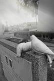2 голубя черепахи Стоковая Фотография