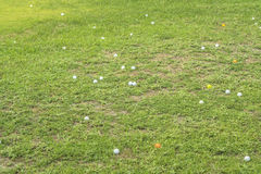 гольф шарика грубый Стоковые Изображения RF