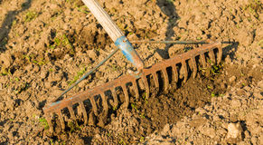 Грабли в садовом инструменте Стоковое Фото