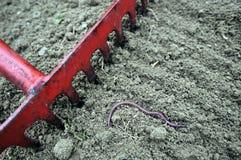 Грабл и Earthworm стоковое фото rf