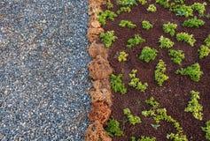 Гравий и зеленые растения Стоковые Фото