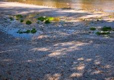 Гравий и листья с небольшими светлыми пятнами на реке стоковое изображение rf