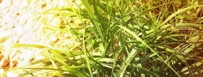 Гравий следа естественной предпосылки знамени и зеленая трава стоковое фото rf