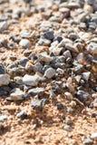 Гравий с песком как предпосылка стоковое фото rf