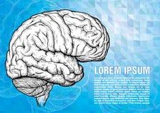 Гравировка человеческого мозга на современном backgound Стоковое Фото