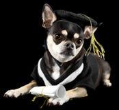 градация собаки стоковые фото