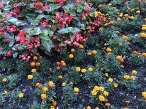 Градиент цветет желтый цвет, апельсин и красный цвет стоковая фотография rf