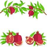 Гранатовое дерево Комплект также вектор иллюстрации притяжки corel Стоковые Изображения RF