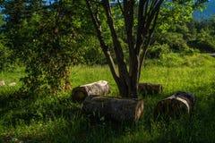 Грандиозные viopis, drome, Франция стоковые фотографии rf