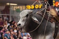 Грандиозный международный парад стоковое фото