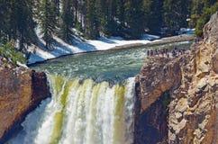 Гранд-каньон национального парка Йеллоустона, США стоковая фотография rf