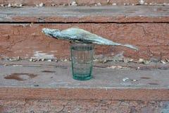 Граненное стекло самогона и посоленных рыб Стоковое Изображение RF